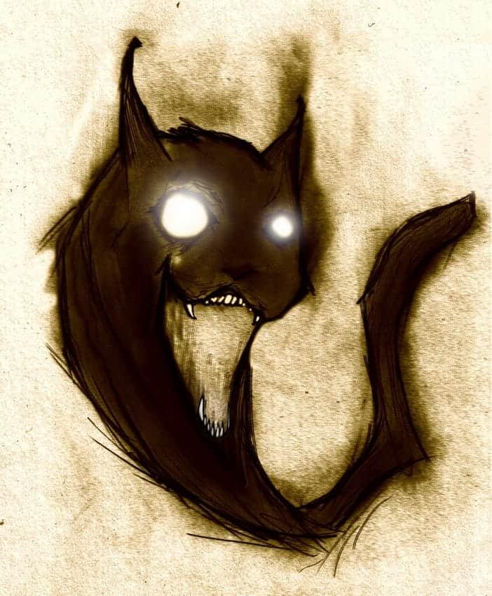 Il gatto nero porta sfortuna?