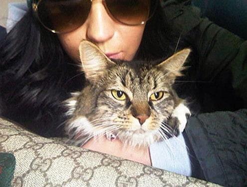 Gatti vip, i gatti delle star e celebrità