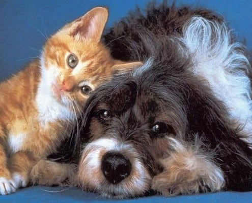 Adozioni tra animali...