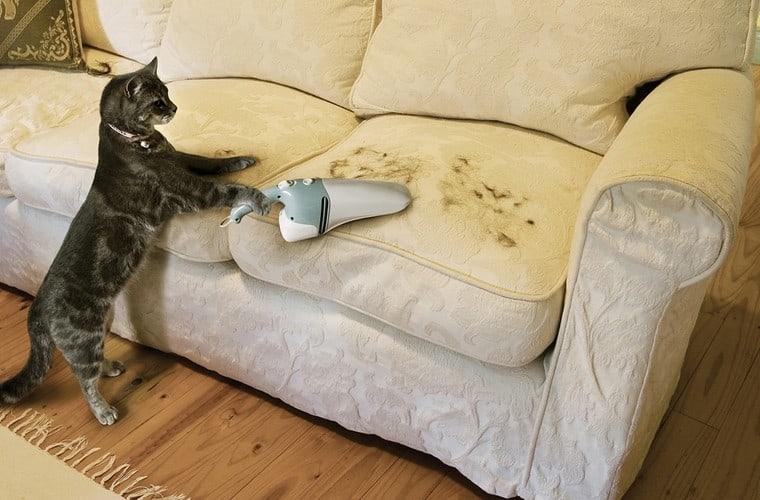 12 consigli utili per rimuovere i peli di gatto dai tessuti in casa