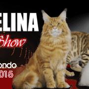 fashion cat show san bonifacio
