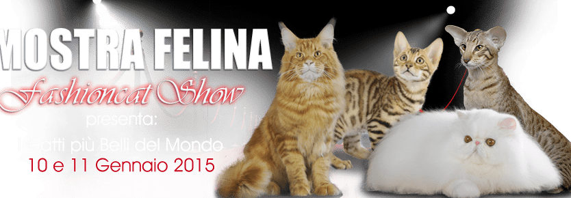 fashion cat show san bonifacio