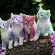 Colori dei gatti