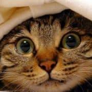 gatto botti capodanno