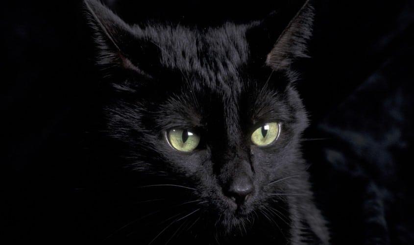 Il gatto nero: superstizione
