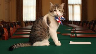 Gatto Larry  Downing Street