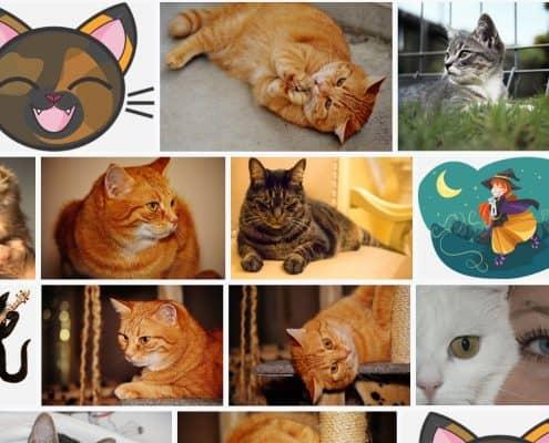 Immagini buffe di gatti