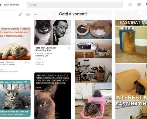 Immagini gatti divertenti pinterest
