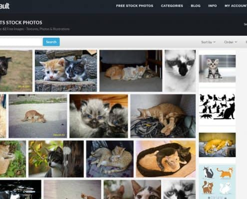 Immagini gratis di gatti