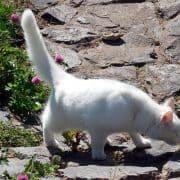 Coda del gatto: linguaggio