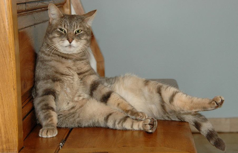 Foto divertenti e buffe di gatti e immagini gratuite a tema gatto