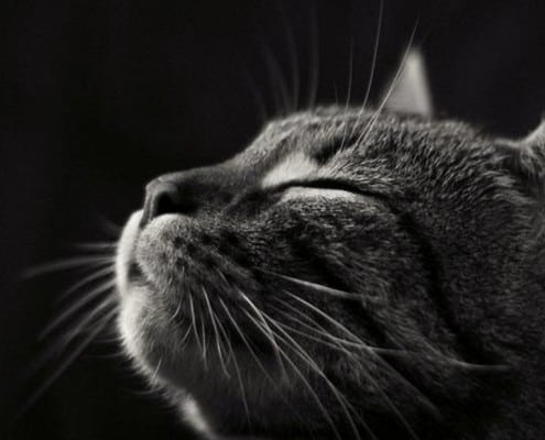 Conoscere ed amare il Gatto - Seminario per proprietari di gatti