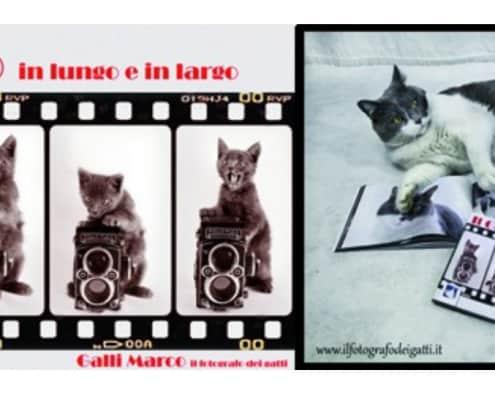 Libro fotografico Il gatto in lungo e in largo di Marco Galli