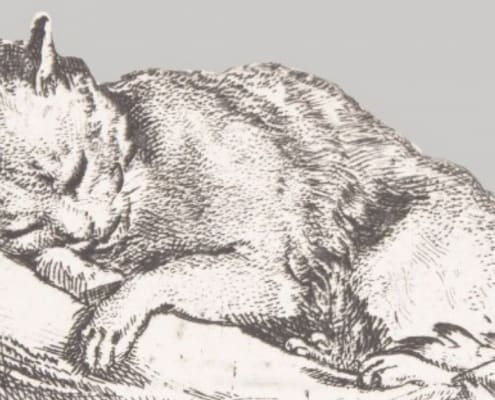 Storie e immagini di gatti a Pisa al Museo della Grafica