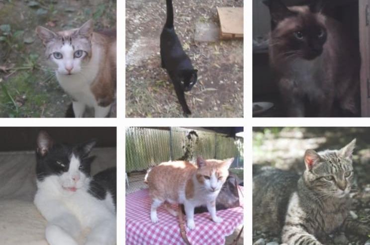 gattile di carpi