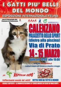 Expo felina di Calenzano
