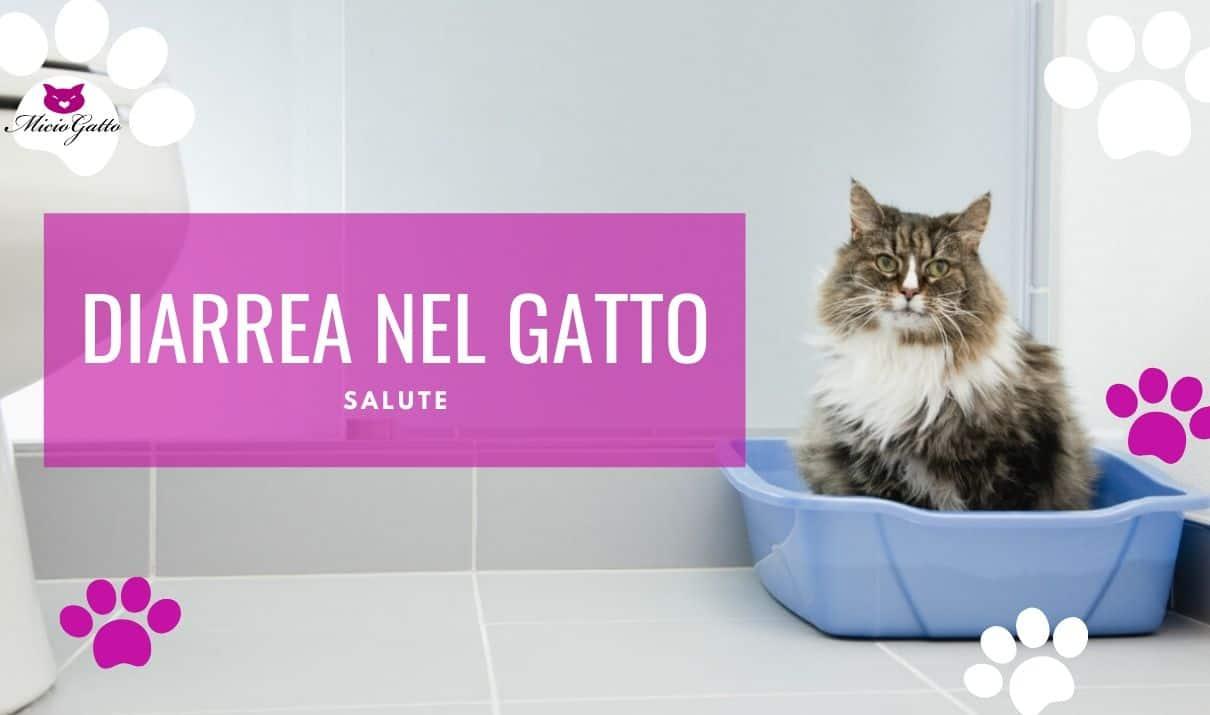 Diarrea del gatto: cure e terapia
