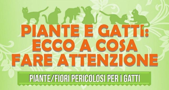 Piante velenose per i gatti for Piante velenose per i gatti