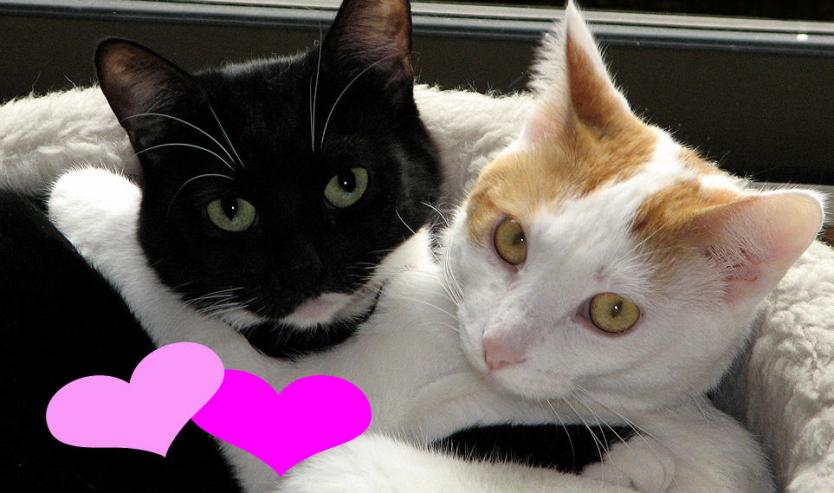 Idee regalo San Valentino tema gatto