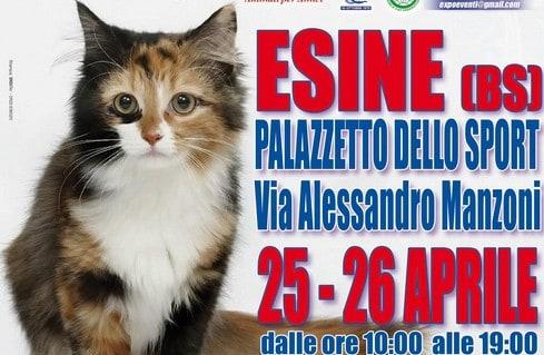 Expo felina di Esine