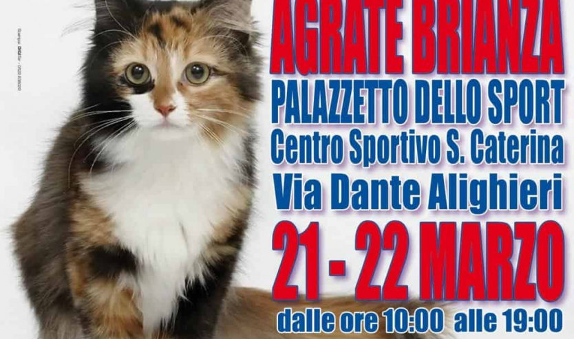 Locandina Expo Felina Agrate Brianza