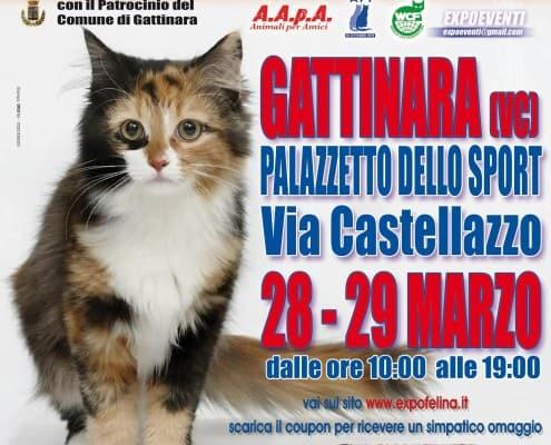 Expo Felina di Gattinara