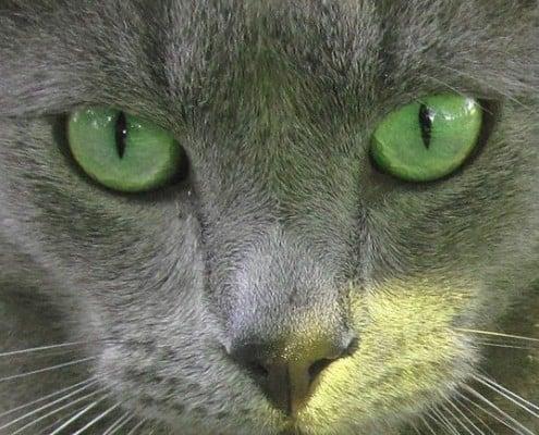 Occhi blu di russia