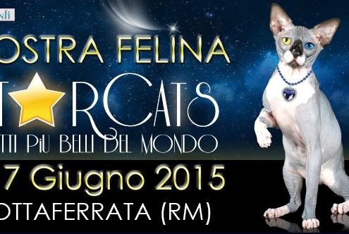 Mostra felina Starcats Grottaferrata (RM)