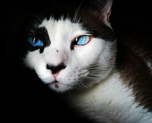Perché il gatto guarda nel vuoto
