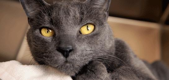 gatta sterilizzata