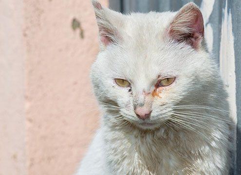 gatto con raffreddore
