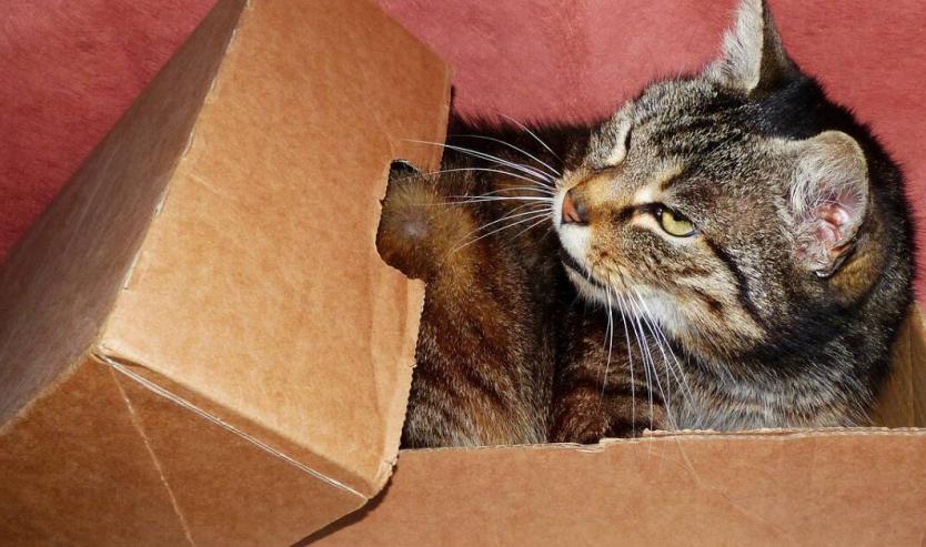 portare il gatto in vacanza consigli