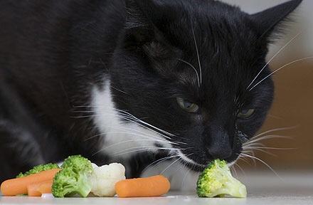 gatti vegani e vegetariani