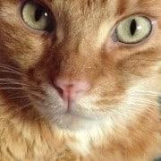 Melfo, il coraggio di un gattino
