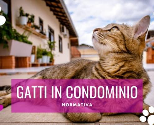 gatti in condominio leggi e normative
