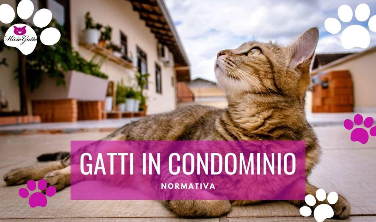 Rete Per Gatti Condominio gatti in condominio: come comportarsi con i vicini che non