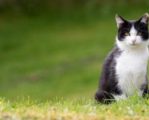 proverbi e detti sui gatti nel mondo