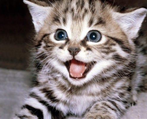 Ho preso un gattino: come devo comportarmi nei primi giorni?