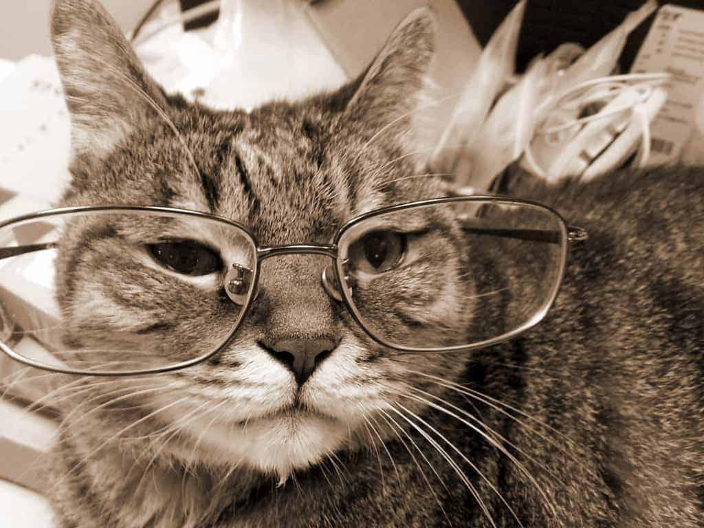Il Gatto Anziano Cosa Succede Quando Il Gatto Invecchia E Come