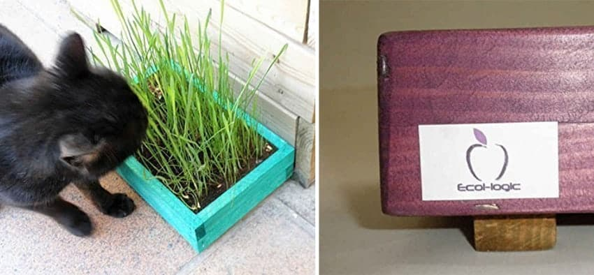 kit erba gatta ecologico