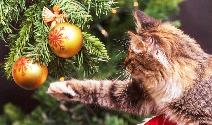 regali di natale per chi ama i gatti