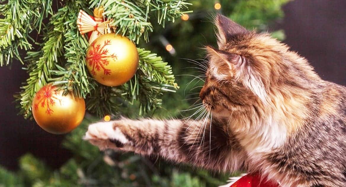 Regali Di Natale Oggetti Per Casa.Regali Di Natale Per Chi Ama I Gatti Oltre 20 Idee Miciogatto It