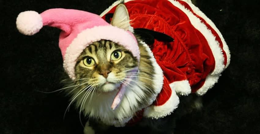 5 Idee Regalo Di Natale Originali Per Il Tuo Gatto Miciogattoit