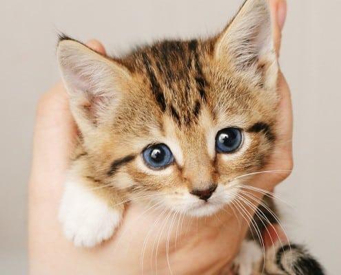abbastanza Gattini piccoli - Tutti gli articoli - MicioGatto.it DD33