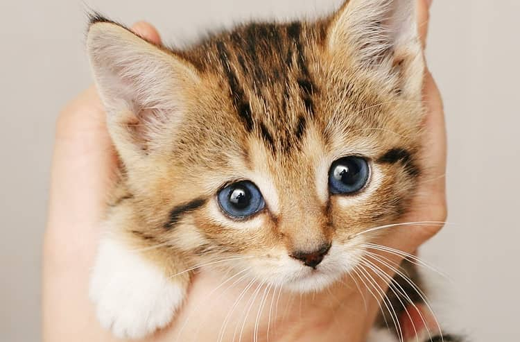 Svezzamento gattini