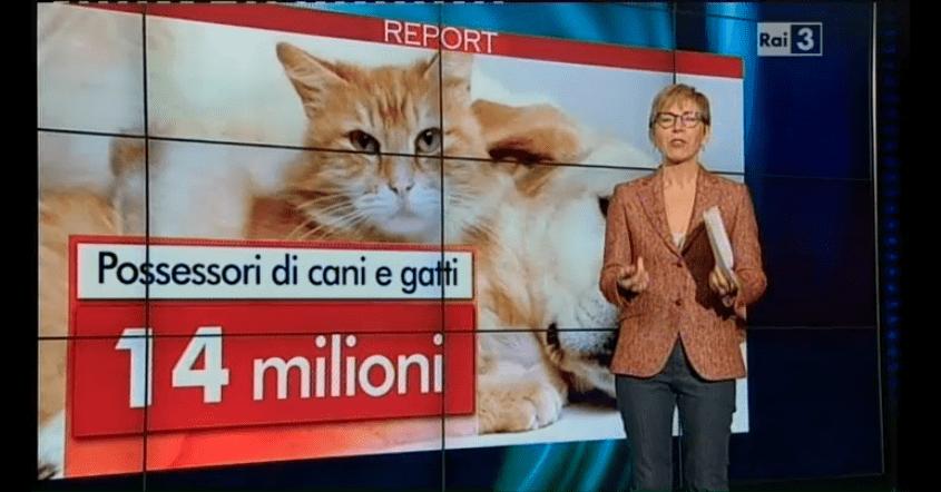 report alimentazione gatto