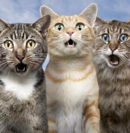 gatti stupefatti