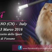 Magia felina 2016