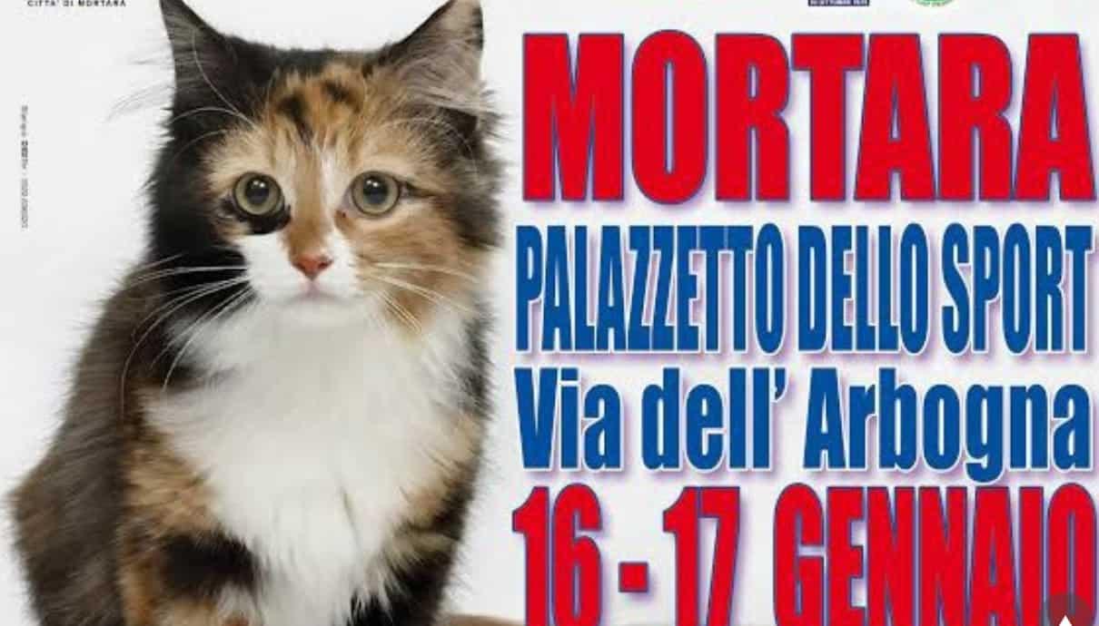 Esposizione felina di Mortara - Pavia 2016