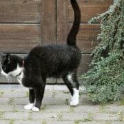 Marcatura del gatto: perché i gatti marcano il territorio e come farli smettere